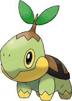 Turtle + twig